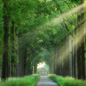 Lars van de Goor Canvas Artwork