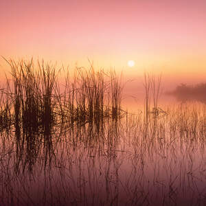 Marshes & Swamps Art Prints