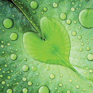 Nature Close-Ups Canvas Wall Art