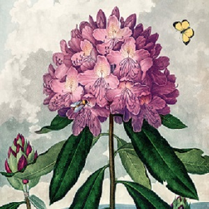 Botanical Illustrations Canvas Wall Art