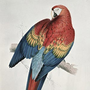 Parrots Canvas Wall Art