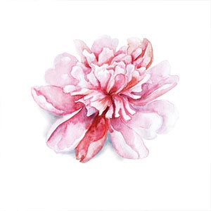 Peonies Canvas Artwork