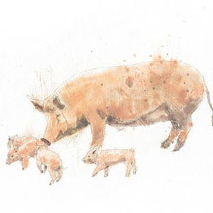 Pigs Canvas Wall Art