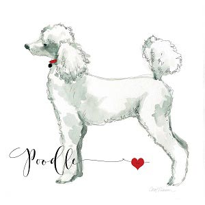 Poodles Canvas Prints