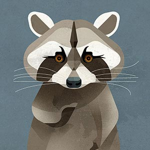 Raccoons Canvas Wall Art
