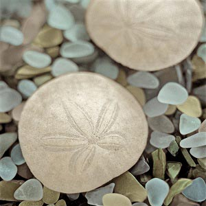 Sand Dollars Canvas Artwork