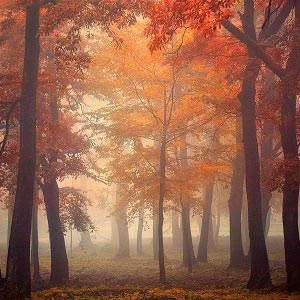Scenic Fall Canvas Wall Art
