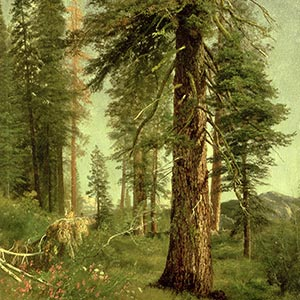 Sequoia Canvas Artwork