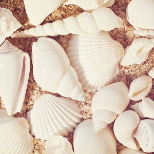 Shell Close Ups Canvas Art
