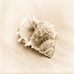Shell Close-Ups Canvas Art