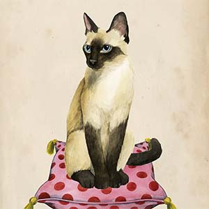 Siamese Canvas Prints