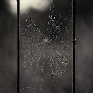 Spider Webs Canvas Art