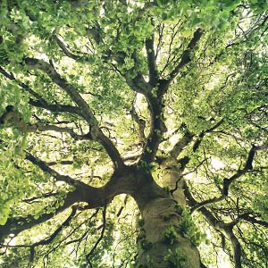 Tree Close-Ups Canvas Wall Art