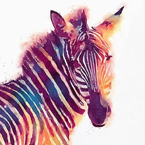 Zebras Art Prints